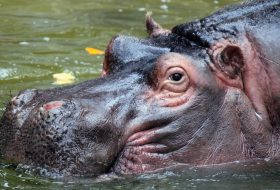 The Hippo Personality